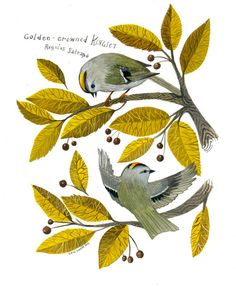 Golden-crowned Kinglet by Diana Sudyka