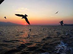 İzmir itt: İzmir