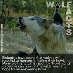 Wolf Facts