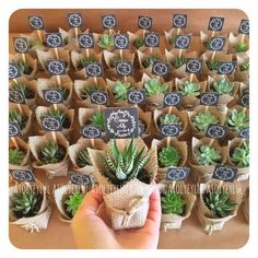 Cute Wedding Favors Best Of Living Room Succulent Vase New Mini Sukulent Mini Su. Cute Wedding Favors Best Of Living Room Succulent Vase New Mini Sukulent Mini Succulent Kaktüs Ideas Wedding Favors And Gifts, Succulent Wedding Favors, Cactus Wedding, Wedding Candy, Wedding Plants, Succulant Wedding, Lily Wedding, Weding Favors, Wedding Guest Gifts