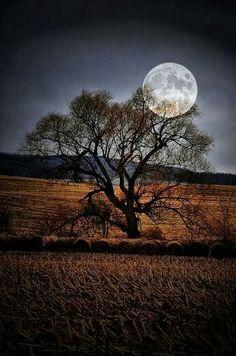 Autumn Moon Tree