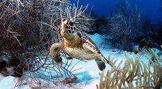 Buddy Dive Bonaire
