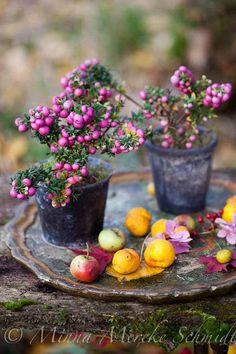 Decorate your autumn garden. Decorate your autumn garden.