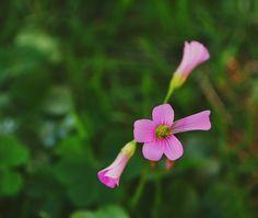 2016-08-03_06-33-03 on Flickr.  Por: Patrícia de Castro.