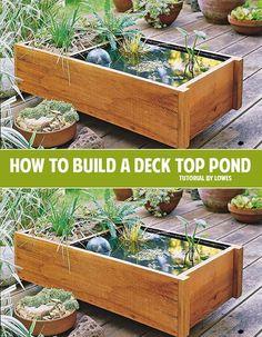 Diy Pond Box Gardens Decks And Diy And Crafts