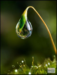 May 30, 2011: Single Dew Drop - Steve's Digicams Forums