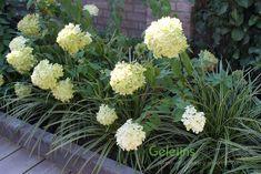 Pergola Garden, Art Pictures, Perennials, Garden Design, Exterior, Landscape, Flowers, Plants, Outdoor