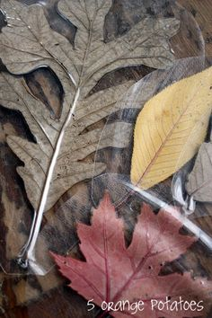 Make leaf rubbing plates. Laminate a pressed leaf, trim around the leaf, and place it backside-up.