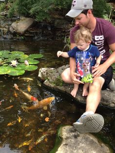 Kids love to learn about the fish and plants. Koi Ponds, Water Gardens, Porches, Pools, Jackson, Nursery, Fish, Plants, Courtyards