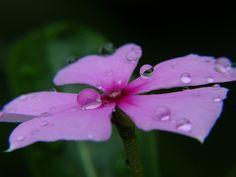 Em dias de chuva....