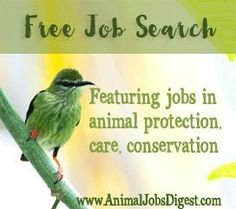 Animal lovers: Find your next dream job. : )