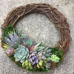 ** Wreaths pictured have been SOLD, this is a listing for a made-to-order wreath. *** A 12 living succulent wreath adorned with a variety … Suculentas Diy, Cactus Y Suculentas, Succulent Wreath, Succulent Terrarium, Succulent Bowls, Succulents In Containers, Succulents Garden, Diy Wreath, Grapevine Wreath