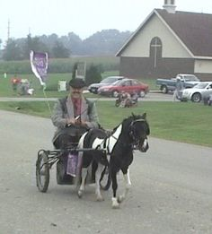 """AMHR/AMHA herd reduction Circle S Billly Cadberry handsome and correct black and white pinto stallion 32 inches and foaled in 1999. AND... Havencrofts Whispering Hope lovely little 3yr old miniature girl 30 to 31 inches tall """"Double Destiny"""" granddaughter. Offered by Havencroft Minis in Wisconsin."""