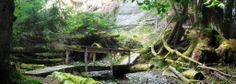 A rustic bridge in the woods - Sointula, Canada