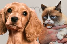 Your dog loves you five times more than your cat - science has proven it
