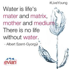 """Water is life's mater and matrix, mother and medium. There is no life without water."" - Albert Szent-Gyorgyi 