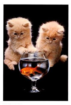 Kitties!!  Now that has their attention! I wonder what the fish is thinking?