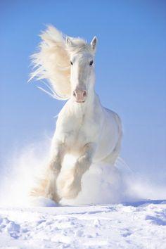 White Gallop