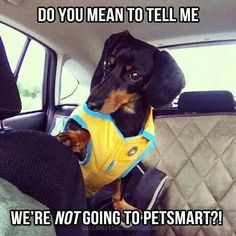 funny dachshund petsmart meme  Keep your kitty Delighted & Healthy Win a $1000 Gift Card - FREE Pet Food for a YEAR!   Tap the LINK  http://DogsDogsBaby.us/GiftCard