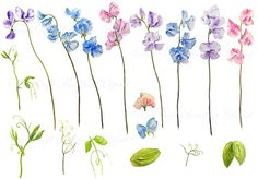 hand painted watercolour sweet pea blue purple pink by CornerCroft, £2.50