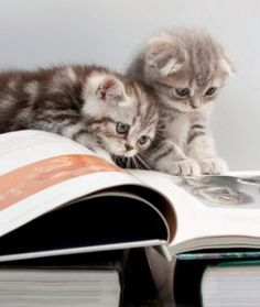 Cats reading to each other.