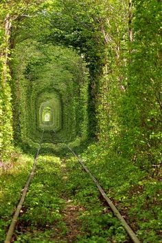 The Tunnel Of Love, Klevan, Ukraine. Would be awesome pic on the wall looks like it goes forever