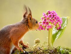 animal-et-fleur5.png