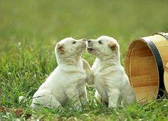 Köpeğinizi yetiştirirken en çok önem vermeniz gereken konulardan biri de sosyalleşmesidir.