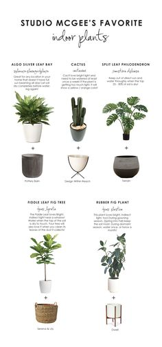 "Shop Concrete Fluted Planter, Large, 23"" Bullet Planter, White, Grooved Droplet Planter, Seagrass Basket, Modernica Case Study Ceramic Cylinder Planter With Wood Stand and more"