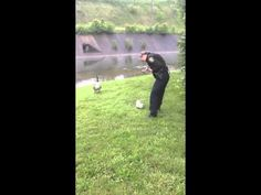 A mama goose in Ohio sought out police help on Monday when her goslings got in trouble video.  Awwww.  I'm glad someone was thre to help! - - - Mother Goose thanks Cincinnati Police - YouTube