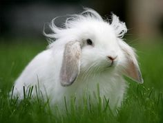 Bunny's Hair Floats in the Breeze - February 23, 2011