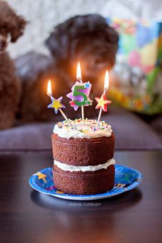 Dog Birthday Carrot Cake With Neufchatel Cheese Frosting