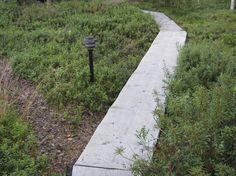 Flower Garden Design, Gardening For Beginners, Paths, Terrace, Sidewalk, Landscape, Flowers, Summer, House