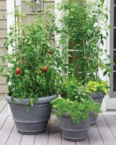 Sturdy containers that can be left out year-round, above, are a good solution. These three sizes of these stackable planters in a lightweight, all weather resin accommodate all kinds of veggies. Large plants such as tomatoes will need staking: Bamboo is an attractive, inexpensive option; sturdy metal tomato cages work well, too. By keeping the plants upright and well aerated, you help minimize the possibility of disease while maximizing yield.