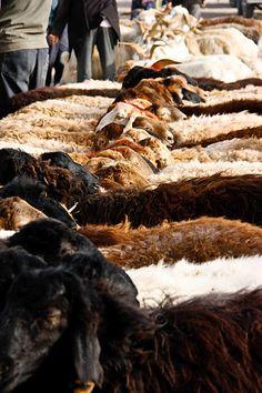 Sunday animal market, Kashgar - http://www.pilotguides.com/tv_shows/globe_trekker/shows/specials/round-the-world.php