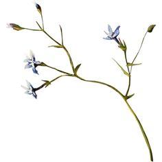 ldavi-paintersfaeries-flower9.png ❤ liked on Polyvore