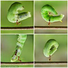 Fakta Tentang Semut >> http://www.kabarmakkah.com/2015/02/subhanallah-inilah-fakta-tentang-semut.html