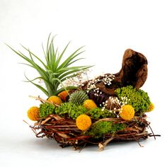 Air Plant  A lovely nest of dried florals & by TallPoppyGardens, $37.00