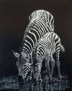 Picture Zebra Drawing, Black Paper Drawing, Sketchbook Drawings, Art Drawings, Charcoal Art, White Charcoal, Scratchboard Art, Silhouette Painting, Scratch Art
