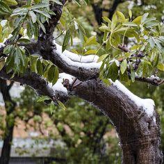 関東は雪の気配がまったくないまま月曜日 週末はすごい降るとの予報はどこいった 天気が良いのは良いことですが雪の写真を撮りたかった ということでこの前降ったときの写真を眺めてますこの日も起きたときには雨に変わってたんですよねぇ #雪#snow #初雪#firstsnow #雪景色#銀世界#積雪 #雨#rain #冬#winter #風景#自然#景色#picture#landscape#nature #東京#日本#tokyo#japan#love#loves_nippon #写真好きな人と繋がりたい #一眼レフ