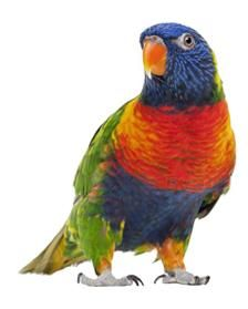 my pet bird essay View my saved essays downloads: 10 grade level: you are missing out on a very incredible pet i have two parrots, one is (winged wisdom pet bird magazine.