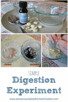 Simple Digestion Experiment