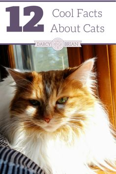 How to remove cat urine smell naturally moving pinterest 12 cool facts about cats to teach your kids ccuart Image collections
