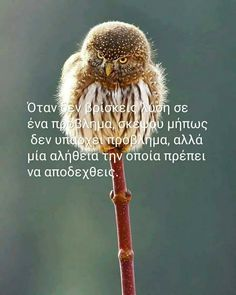 Greek Quotes, How To Better Yourself, Kids And Parenting, Picture Video, Inspirational Quotes, Wisdom, Letters, Kirby Cove, Den
