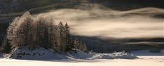 Morgendliche Nebelschwaden, ziehen durch den Brockenwald.