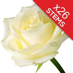 26 White Roses Send a Bouquet of 26 premium white roses http://www.MightGet.com/january-2017-12/26-white-roses.asp