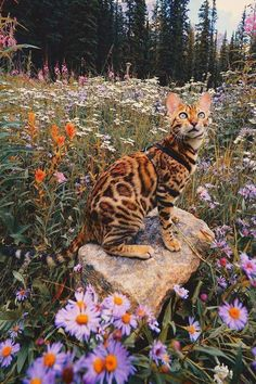 I don't know what I like more....the flowers or Bengal Cat!