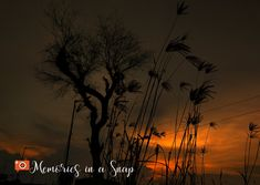 Memories, Celestial, Sunset, Outdoor, Memoirs, Outdoors, Souvenirs, Sunsets, Outdoor Games