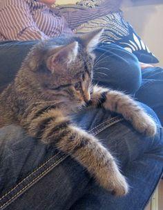Minni, our cat