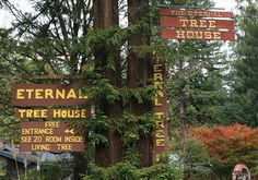 When visiting the Avenue of the Giants, a fascinating stop is the Eternal Tree House. This one-time giant of nature endured over 2,500 years before being reduced to a surviving stump. The still-liv...